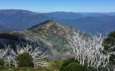 the experience buller huts trail